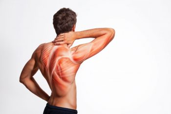 Febra musculara – privire de sinteza