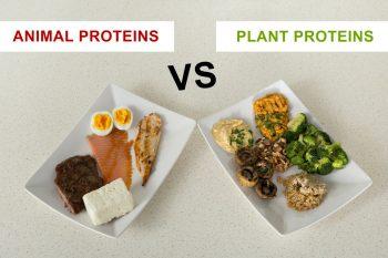 Proteinele de origine animală versus proteinele vegetale