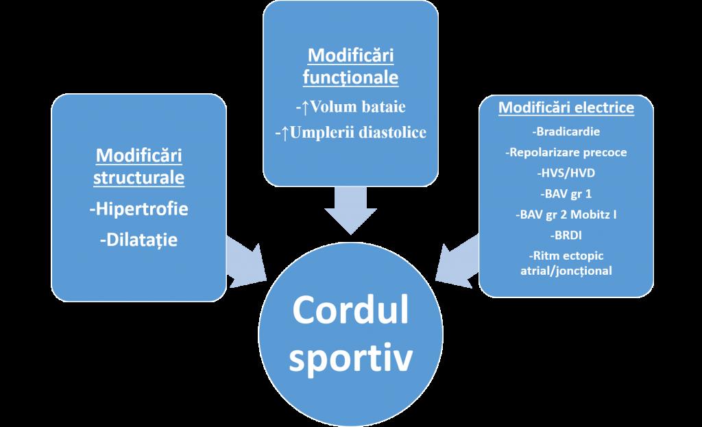 Cordul sportiv