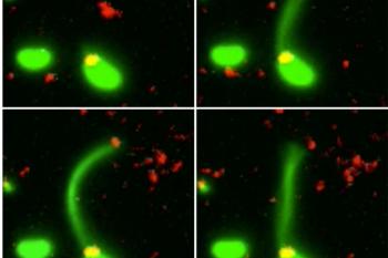 Cercetătorii au descoperit modalitatea prin care bacteriile absorb ADN