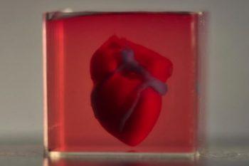 Prima inimă 3D vascularizată a fost creată în laborator! (VIDEO)
