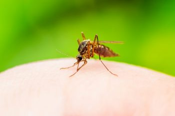 Grafenul, soluție împotriva malariei?
