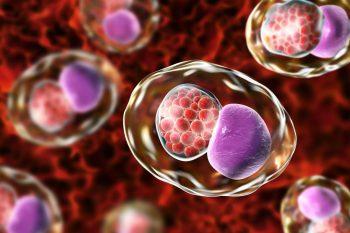 Un vaccin împotriva Chlamydiei a trecut primele teste clinice