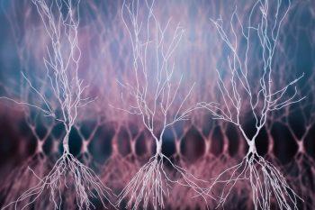 Un grup de neuroni ajută la mişcarea ochilor în spaţiul 3D