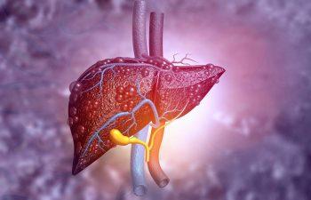 Au fost descoperite celulele responsabile de regenerarea ficatului