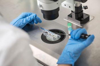 Molecula IRE1α joacă un rol important în patogeneza lupusului