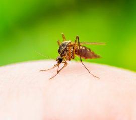 vaccin-anti-malarie